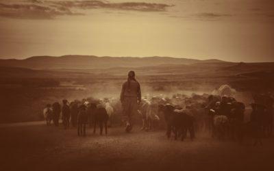 The Shepherd's Staff